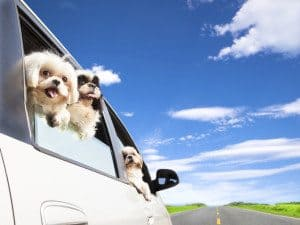 Pets and travel are you wondering where you can take them to with you?