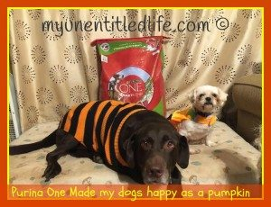 purina one smartblend dog food review