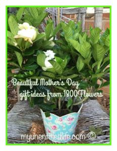 gracious gardenias gift ideas from 1800Flowers