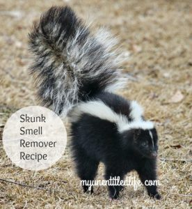 Skunk Smell Remover Recipe that is Vet Recommended