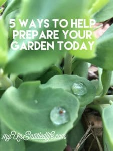 5 Ways to help prepare your garden today