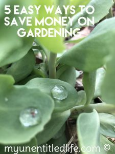 5 easy ways to save money on gardening