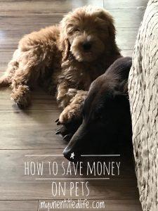 how to save money on pets