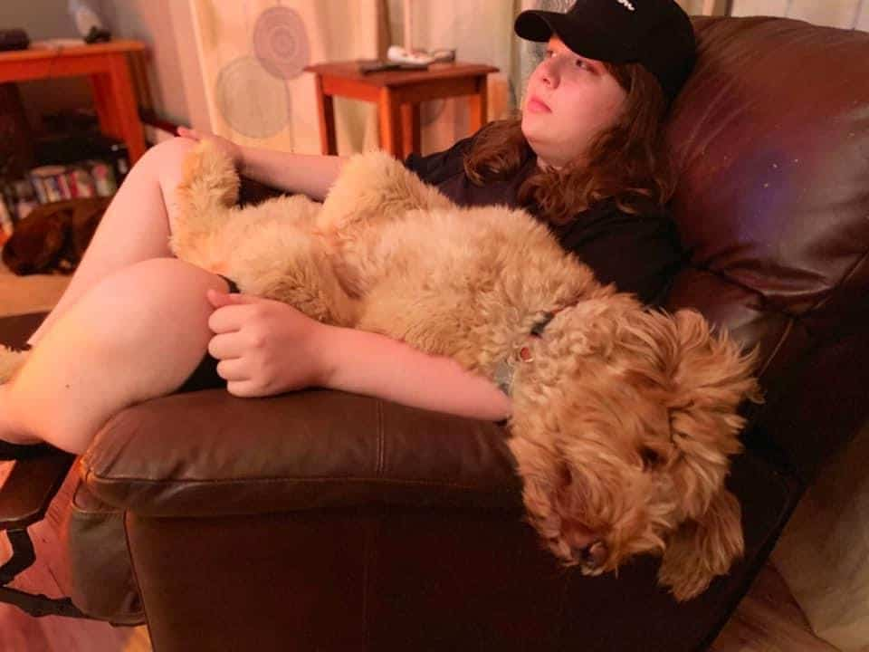 Goldendoodles puppy and teen